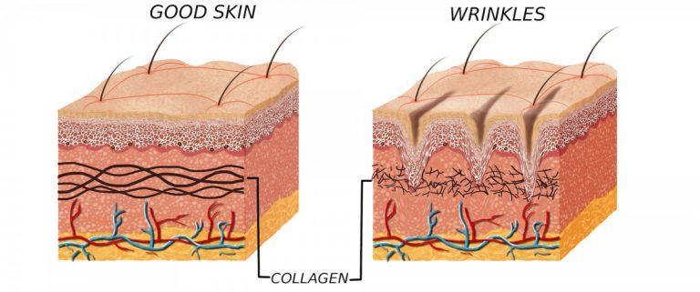 wat doet collageen voor de huid